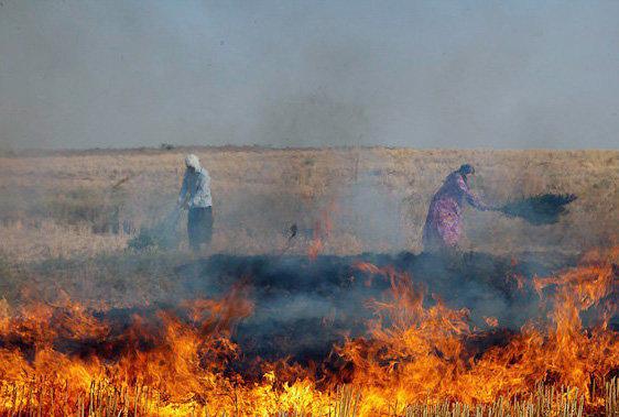 fields fire1