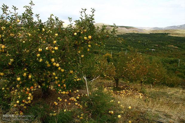 باغ شهریار-5