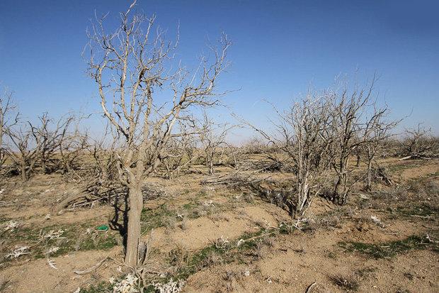 خشکسالی-خراسان جنوبی
