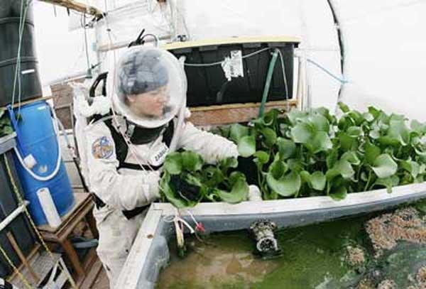 کشف پروتئینی که کشاورزی در فضا را ممکن میکند