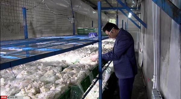 مرکز پرورش قارچ های شاه صدف