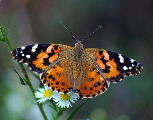 پروانه خانم قشنگ